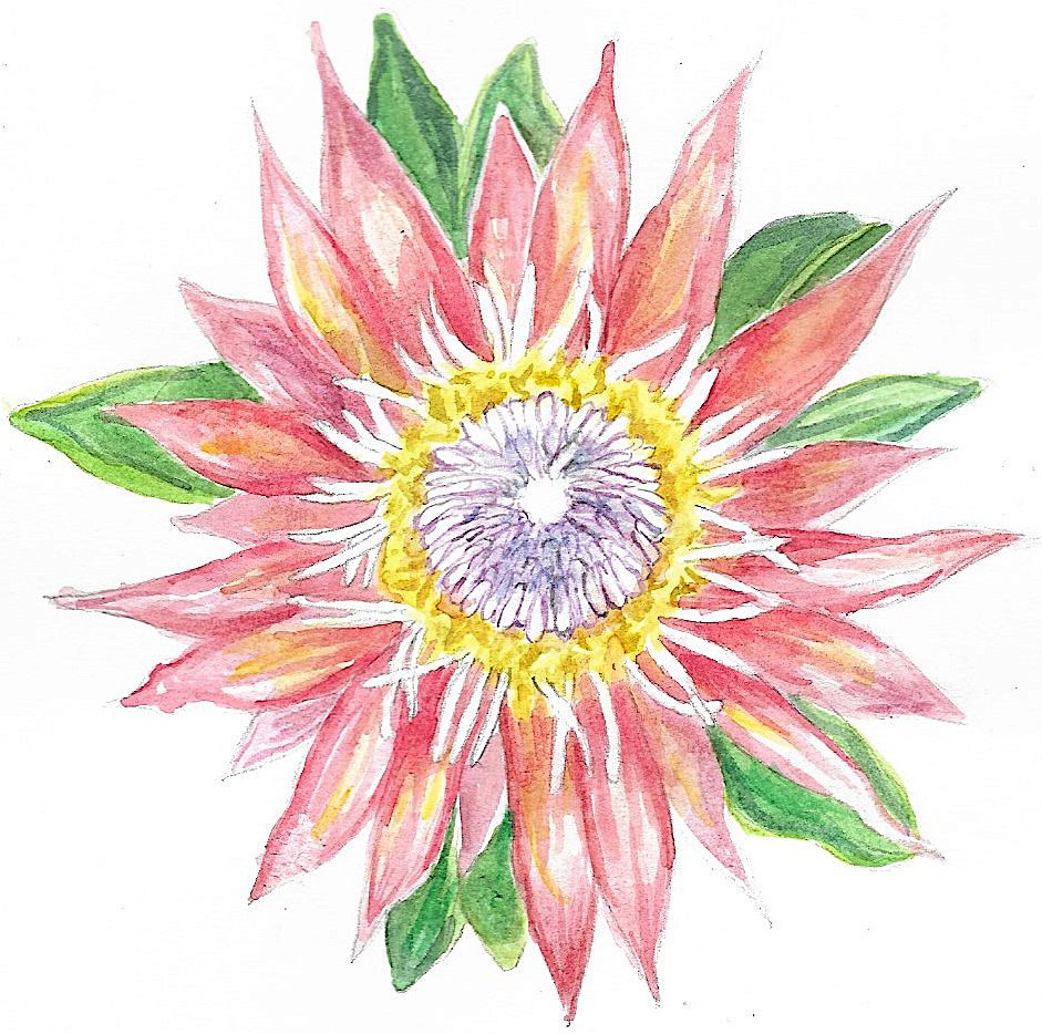 cropped-logo-protea-sass-color.png